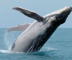 Five Things You Need To Know About Whale Watching Sydney