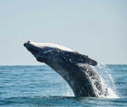 5 Best Whale Watching Spots In Sydney